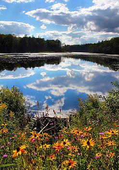 Summer Adirondack Lake In Bloom by David  Jones