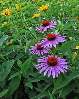 Shari Jardina - Summer Blooms