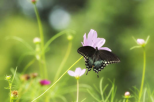 Summer Butterfly by Mark Gilmore