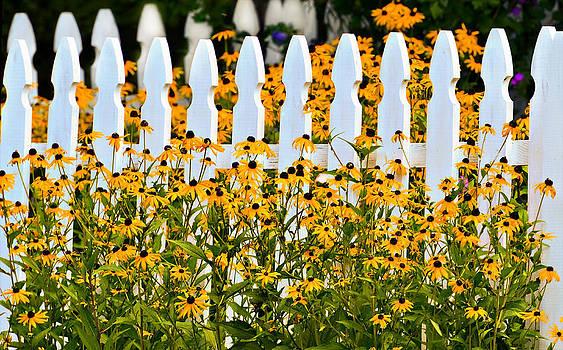 Summer Daisies by Susan Leggett