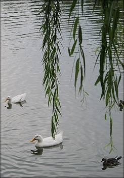 Summer ducks by GuoJun Pan