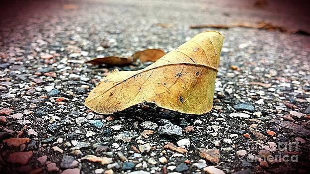 Summer Fall by Imani  Morales