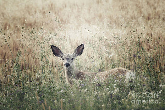 Summer Fawn by Prairie Poetry