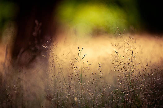Summer Field by India Blue photos