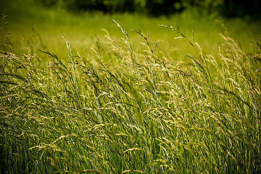 Summer fields by Paul Bartoszek