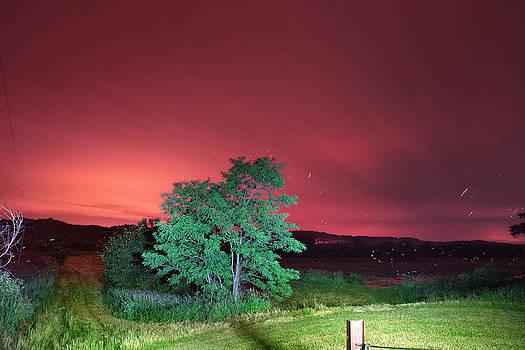 Mary Almond - Summer Fireflies