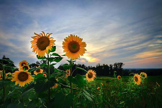 Summer Glory by Victoria Winningham