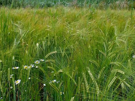 Summer Grass by Emma Manners