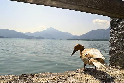 Summer in Austria by Arthur Hofer