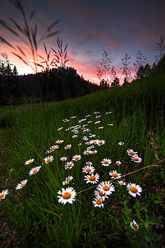 Summer in Spearfish by Chris  Allington