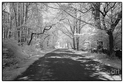 Summer Lane by Don Fleming