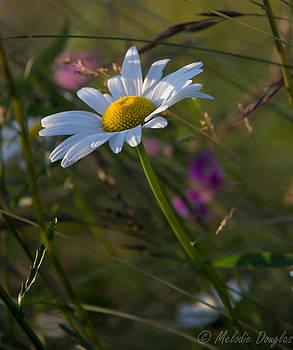 Summer Lovin by Melodie Douglas