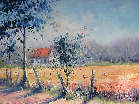 Summer Morning by Andrei Attila Mezei