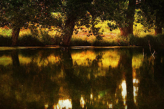 Summer Shadows by Vjekoslav Antic