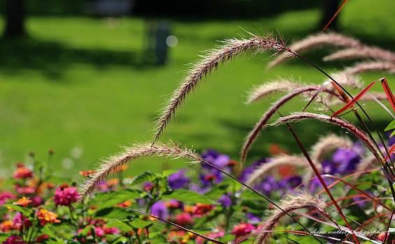 Summer Wind by Diana Walker