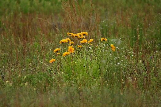 Summers Wildflowers by Kim Pate