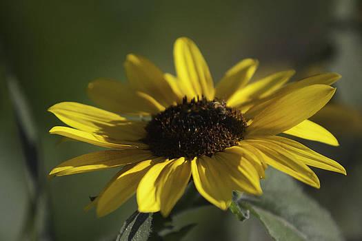 Gilbert Artiaga - Sun Flower 2