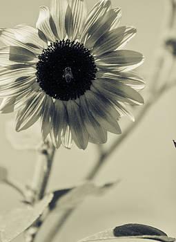 Gilbert Artiaga - Sun Flower Art
