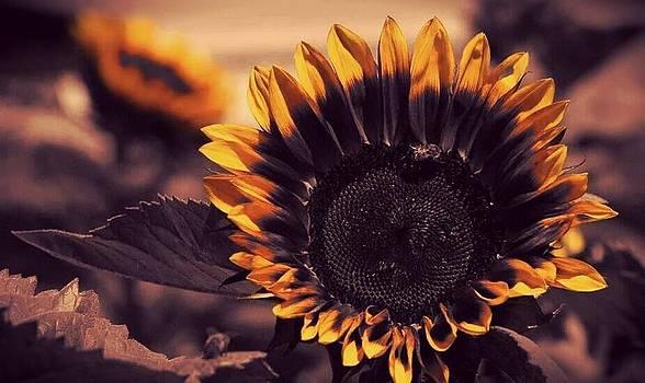 Sun Flower by Erin Lorandos