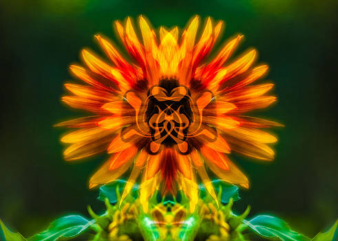 Omaste Witkowski - Sun Flower Rising
