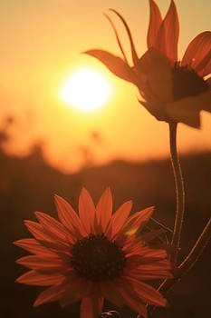 Sun Glow by Alicia Knust