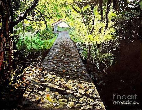 Sun kissed Pathway by Kelvin James