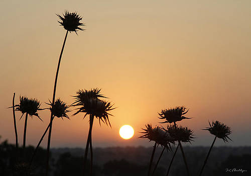 Sun Rise On Bethsaida by Jennifer Kathleen Phillips