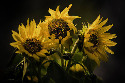 Sun Sisters by Jens Tischer