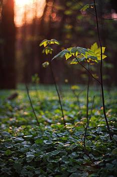 Sun-Soaked Forest Ground by David Schoenheit
