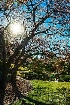 Jamie Pham - Sun Star Blossom