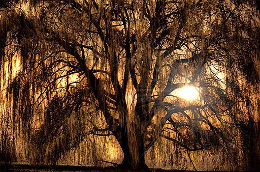 Emily Stauring - Sun Through The Willow