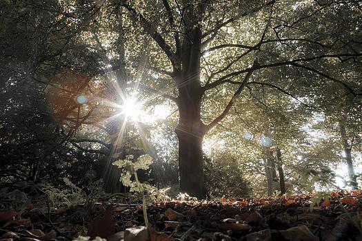 Sun trough tree's in forest by Aaldrik Bakker