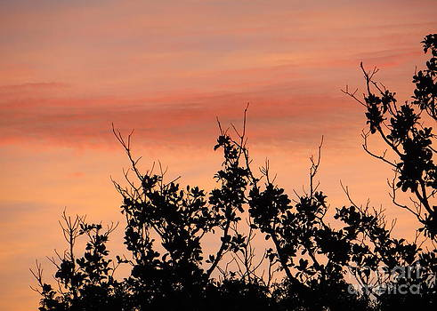 Sun Up Silhouette by Joy Hardee