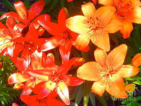 Sunbathing Lilies by Michelle Stradford