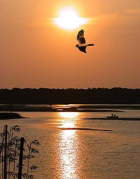 Sunbird by Joseph Tese
