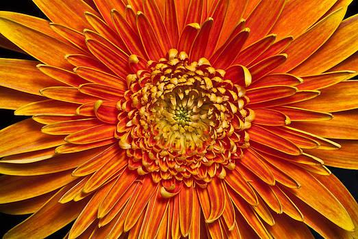 Sunburst by Art Barker