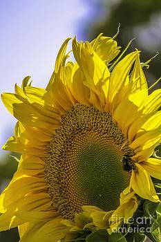 Sunburst by Kimberly Nyce