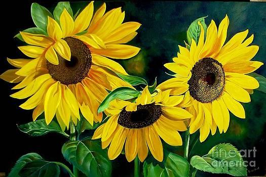 Sunburst by Linda Hunt