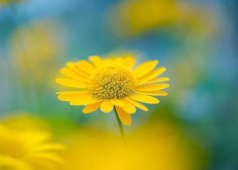 Sunburst by Sarah-fiona  Helme