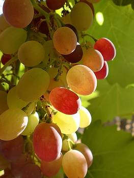 Sundrenched Grapes  by Keeza Starr