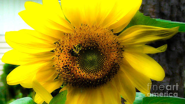 Sunflower by Brittany Perez