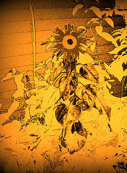 Sunflower cycle by Skip Stutler
