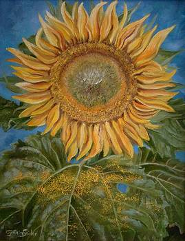 Sunflower by Cynthia Snider