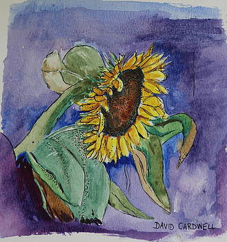 Sunflower by David Cardwell