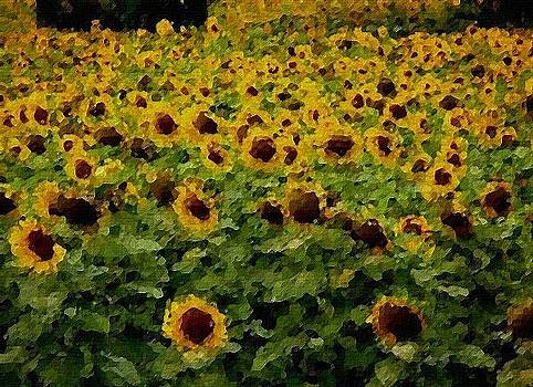Sunflower Field by Neacsu Karelia Mihaela