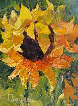 Sunflower Gaze by Lori Quarton