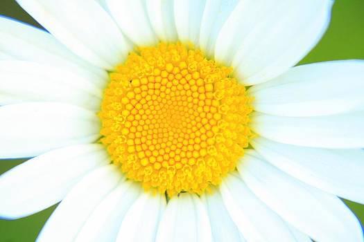 Sunflower happy flower by Daliya Photography