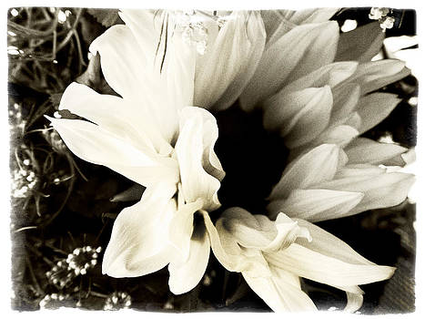 Sunflower In Black and White 3 by Tanya Jacobson-Smith