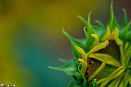 Sunflower in dream by Kornrawiee Miu Miu