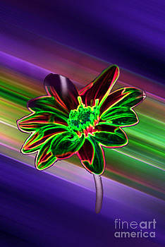 Sunflower In Neon Colors by ImagesAsArt Photos And Graphics